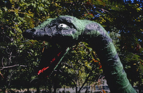 Prehistoric Forest - OLD JOHN MARGOLIES PHOTO